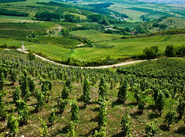 Etyek Wine